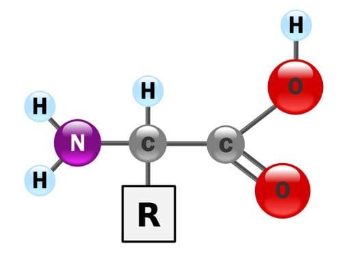 Phân tử amino axit