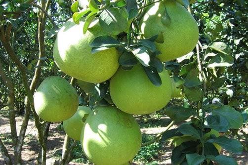 Sử dụng Amino axit kích thích tăng trưởng cây trồng