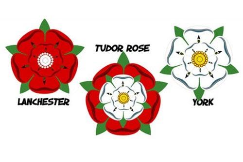 Hoa hồng Tudor