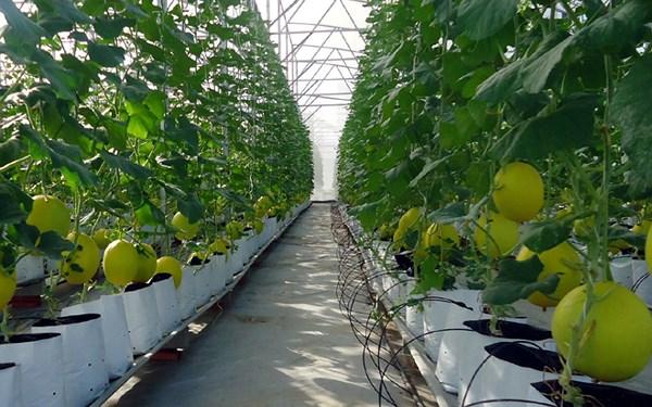 Sử dụng nông nghiệp công nghệ cao