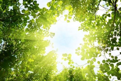 chăm sóc cây vào ngày nắng nóng