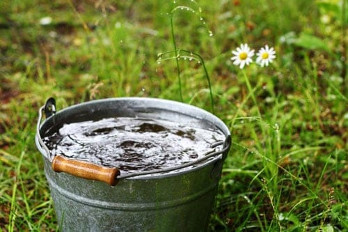 Tưới nước bổ sung cho cây