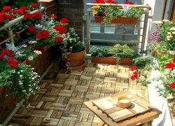 Chăm sóc ban công rực rỡ hoa màu