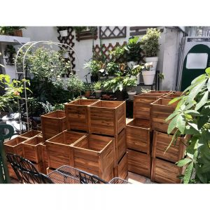 chậu gỗ vuông tràm bông vàng