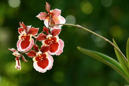 Điều kiện sinh thái của hoa lan