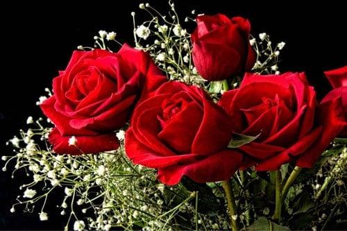 ý nghĩa hoa hồng đỏ ngày quốc tế phụ nữ