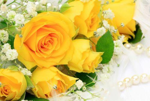 Trong thời hiện đại, hoa hồng vàng tượng trưng cho tình bạn chân thành, tình yêu ấm áp