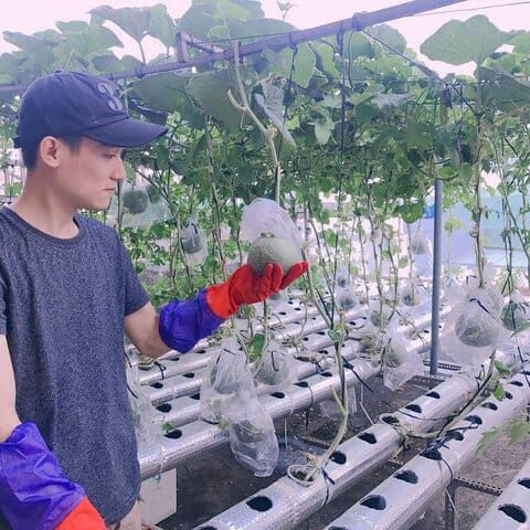 Mô hình trồng rau thủy canh của chàng sinh viên Hoàng Quốc Thịnh