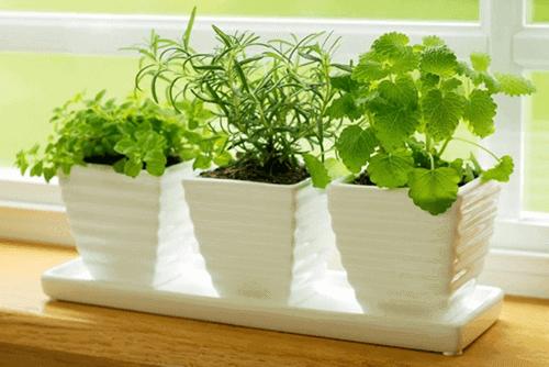 Nên chọn những cây gia vị trồng trong nhà bếp để khử mùi