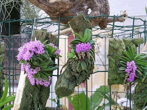 10 giá thể cho hoa lan