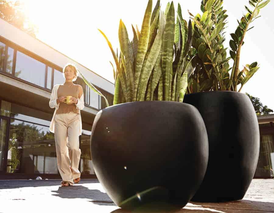 Cây lưỡi hổ được trồng trong chậu composite Esteras