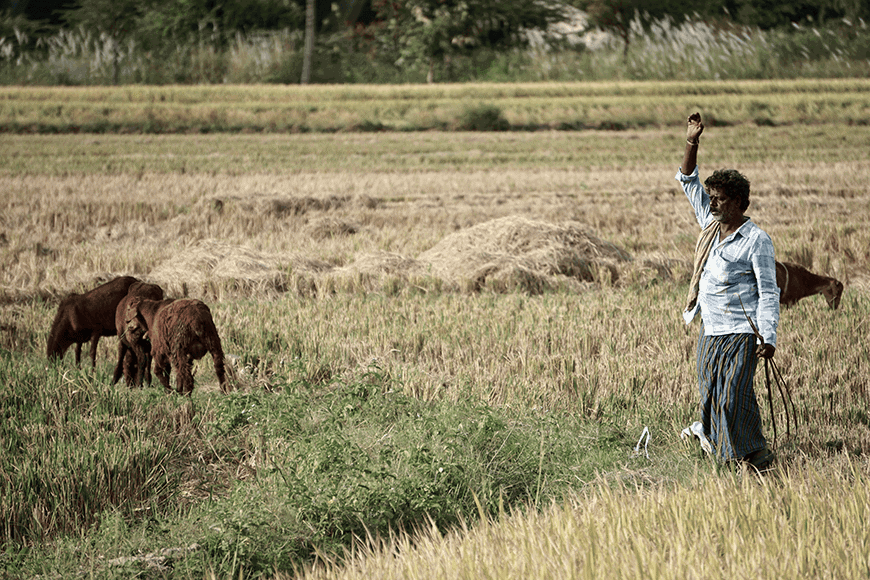 tầm quan trọng của phân dê trong trồng trọt