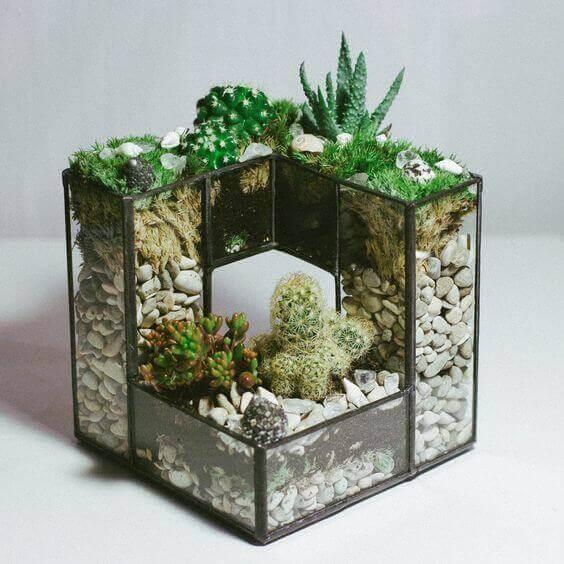 Hướng dẫn trồng cây xanh trong nhà