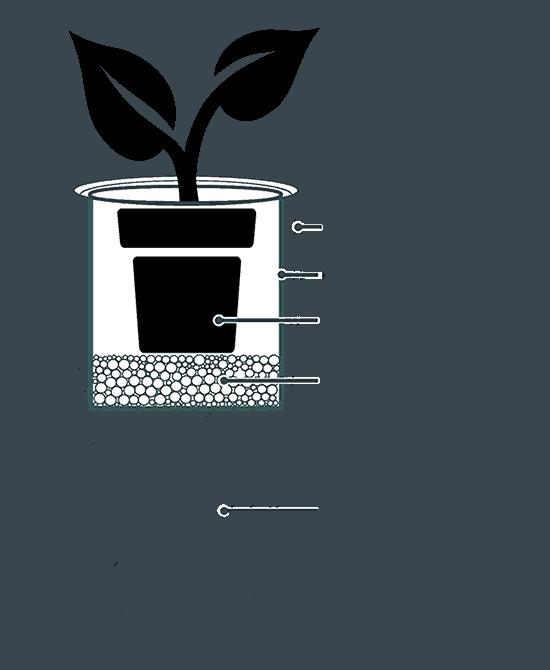 Hướng dẫn cách chăm sóc cây xanh trong nhà hiệu quả nhất
