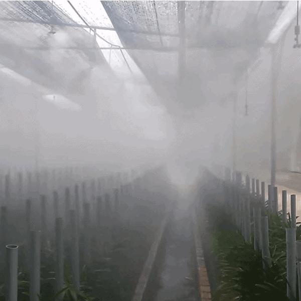 cách trồng lan mokara trong chậu 3