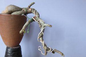 Kỹ thuật uốn cây cảnh bonsai 1
