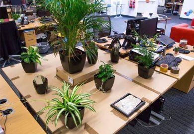 Ý nghĩa của cây cảnh mini văn phòng