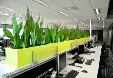 Cây cảnh văn phòng nâng cao thái độ làm việc trong ngày của nhân viên