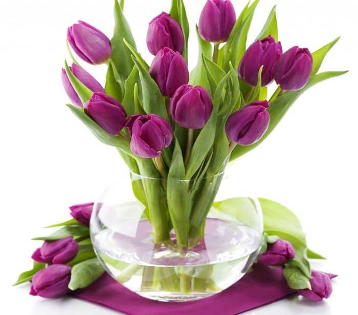 Ý nghĩa hoa tulip 1
