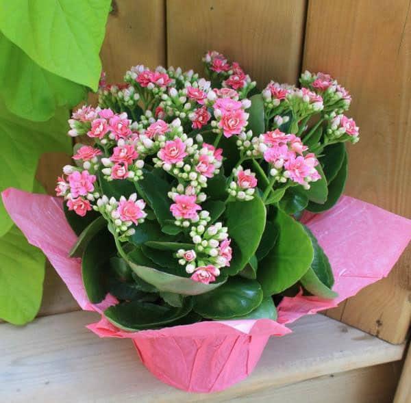 Hoa tặng sinh nhật đẹp và ý nghĩa – Hoa sống đời nhẹ nhàng