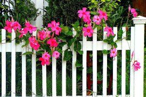 Kỹ thuật trồng và chăm sóc hoa hồng anh để hoa luôn rực rỡ 1