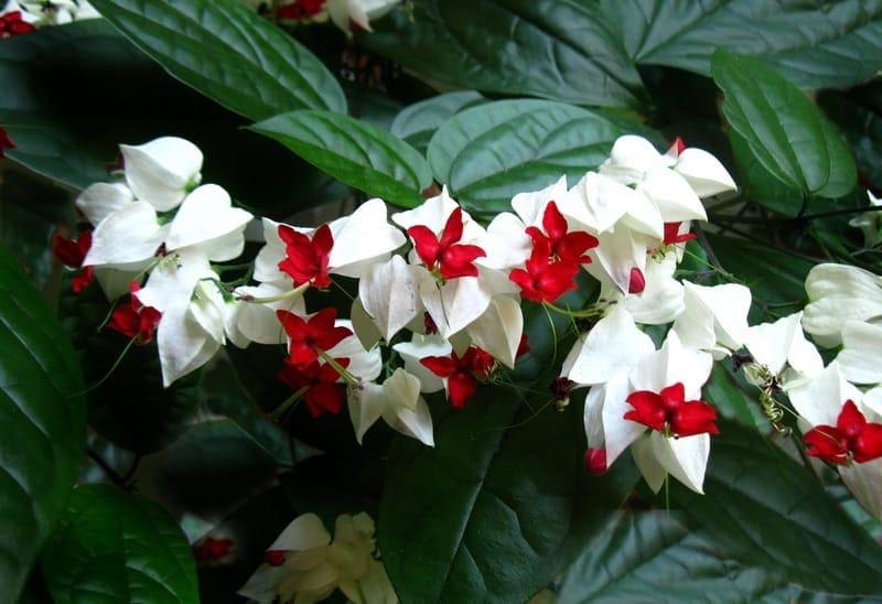 Những loài hoa màu trắng mang vẻ đẹp tinh khôi – Hoa ngọc nữ