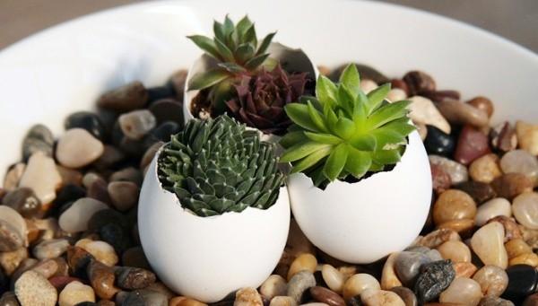 Trồng cây cảnh văn phòng trong vỏ trứng
