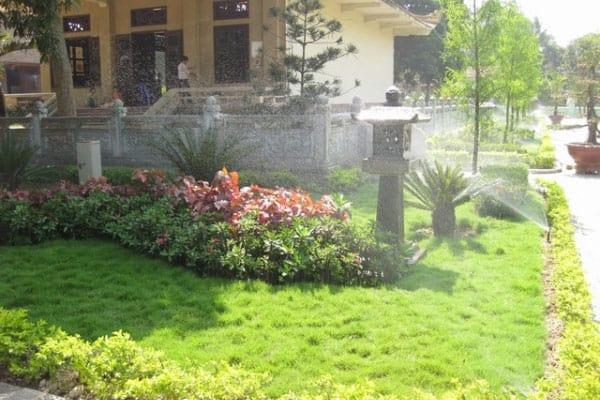 tưới sân vườn 1