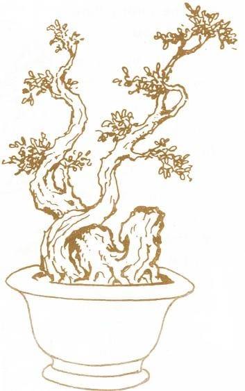 Những thế cây bonsai đẹp, mang ý nghĩa phong thủy tốt – Thế long đàn phượng vũ