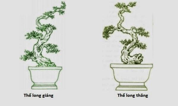 Những thế cây bonsai đẹp, mang ý nghĩa phong thủy tốt – Thế long giáng