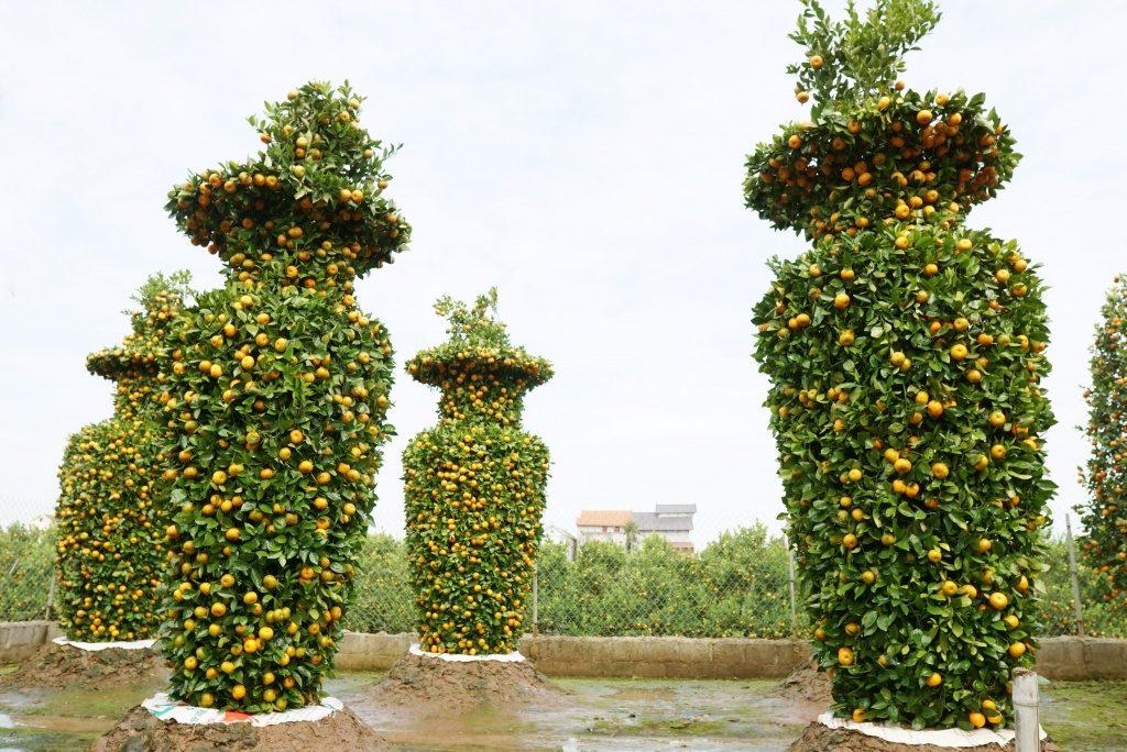 Những thế cây quất siêu đẹp 4