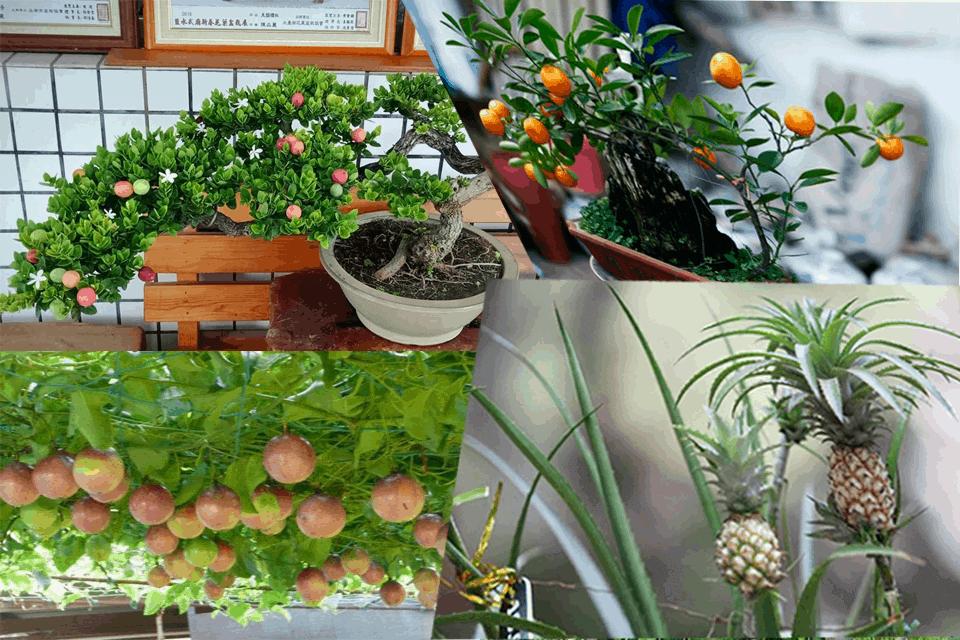 Trồng cây ăn quả trên ban công 6