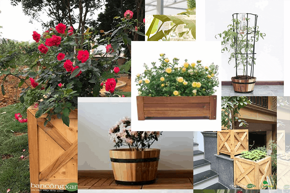các dạng chậu gỗ cho hoa hồng đẹp