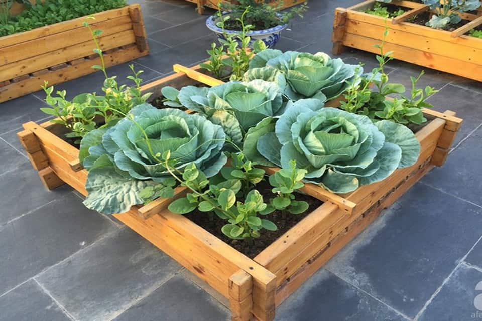 trồng rau trogn chậu gỗ
