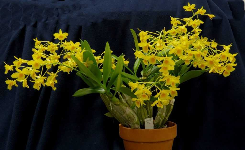 Giữ hoa lan lâu tàn