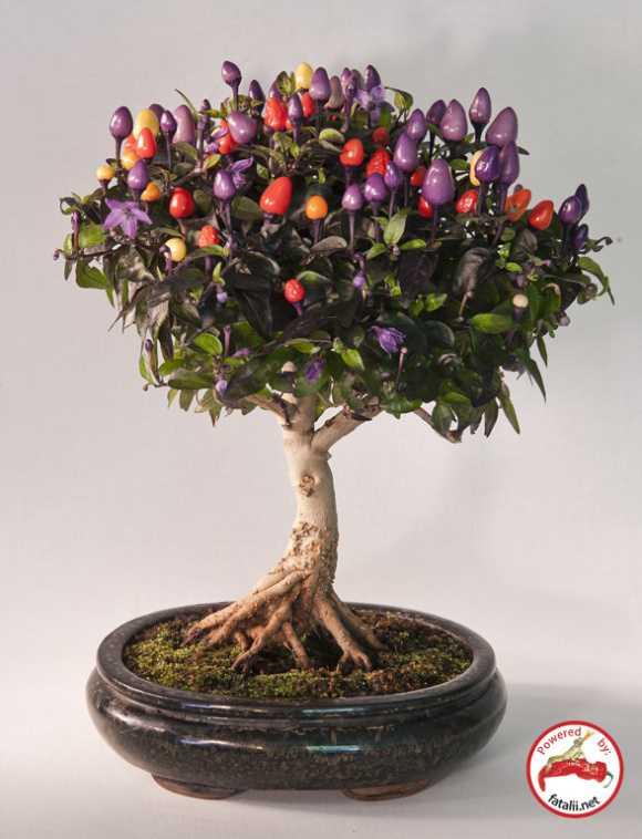 Những chậu cây cảnh bonsai đẹp từ rau củ quả 2