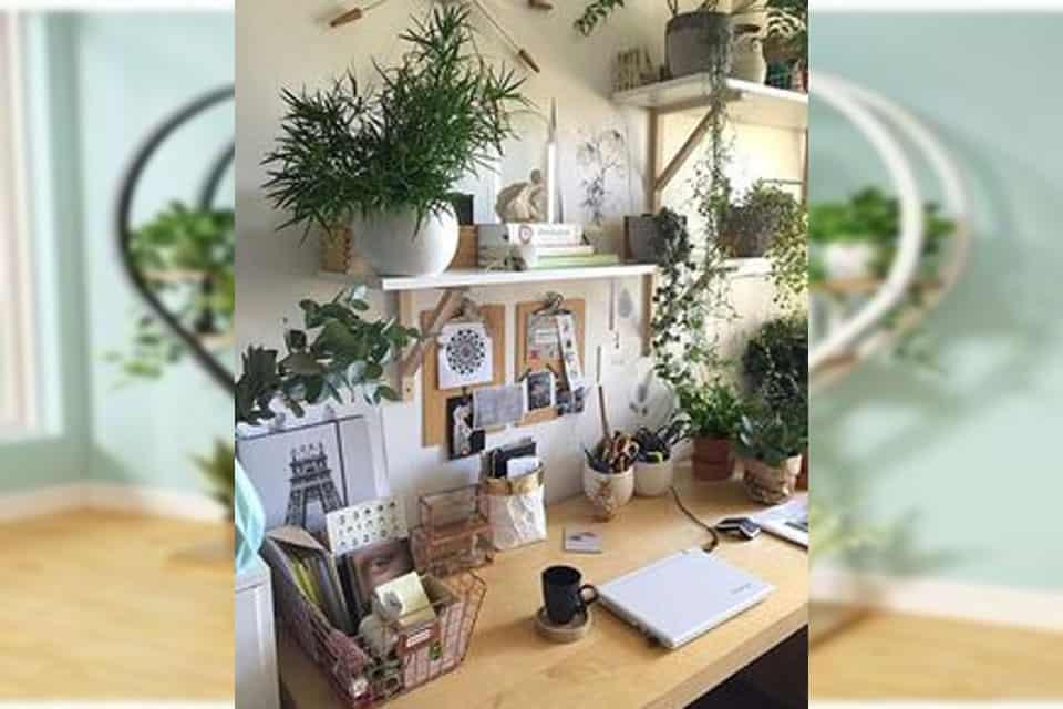 cây xanh văn phòng để bàn