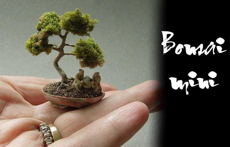 kinh nghiệm trồng cây bonsai mini