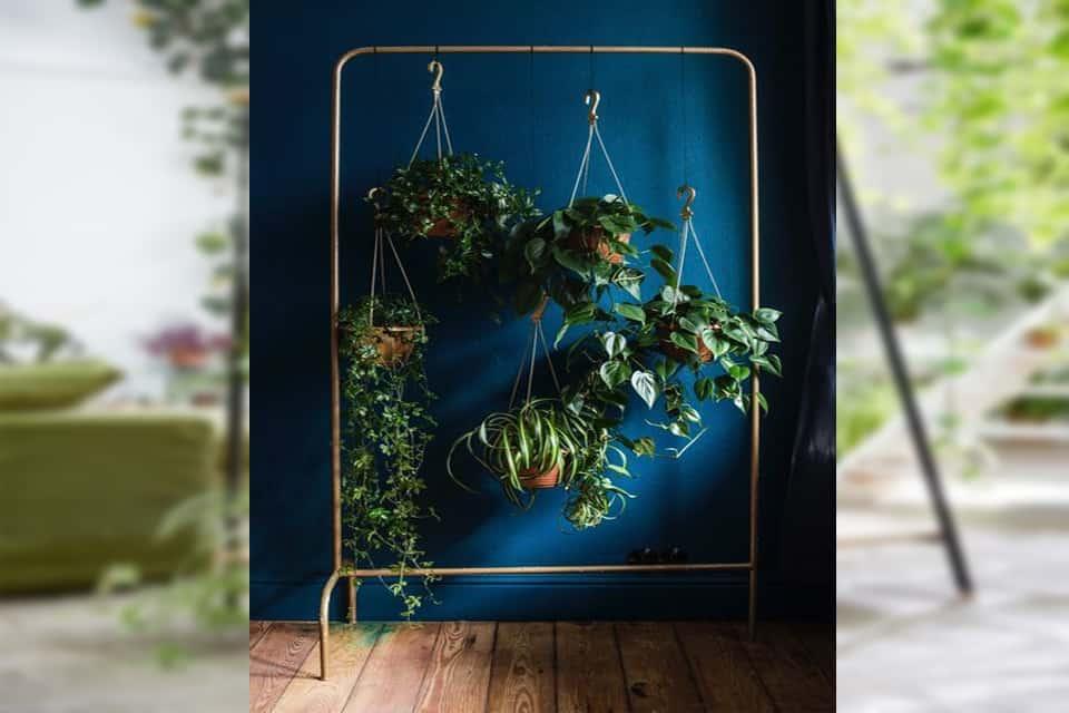 tác dụng của cây xanh trong nhà