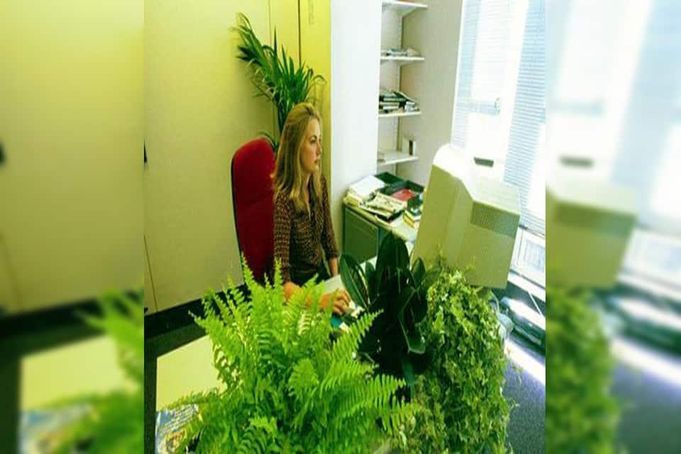 tác dụng của cây xanh văn phòng