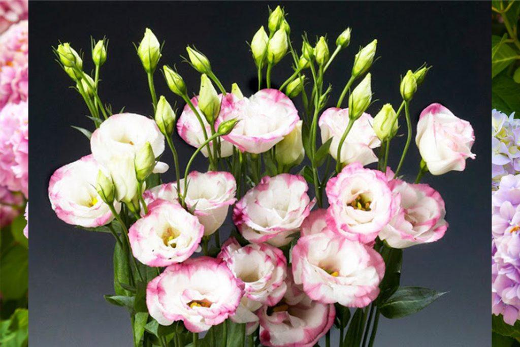 các loại hoa tết dẽ trồng