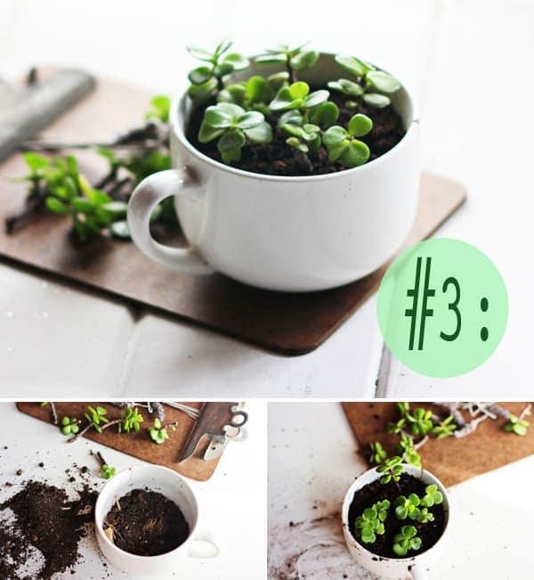 Chậu trồng cây để bàn từ cốc