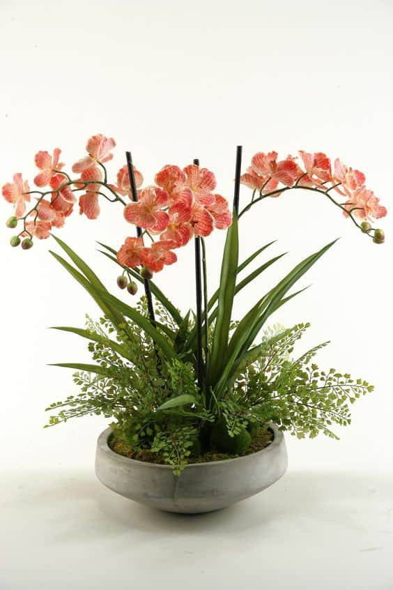 hoa lan 1