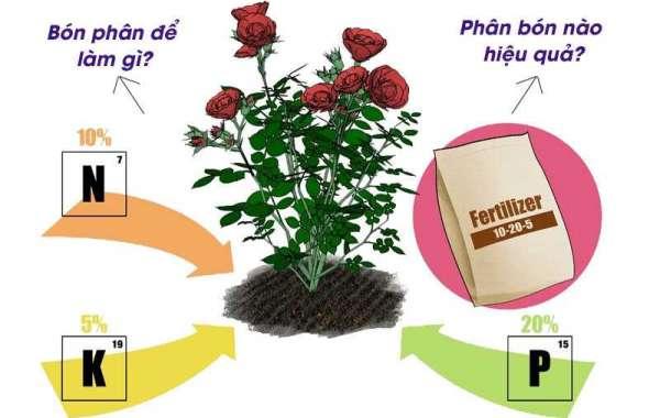 Cách bón phân cho hoa hồng