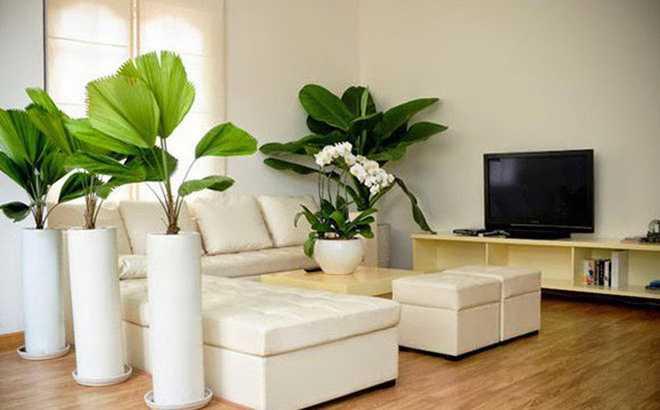 Sắp xếp cây cảnh trong nhà - Phòng khách