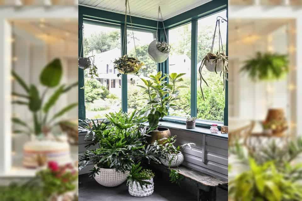 Các loại bệnh cây trồng trong nhà