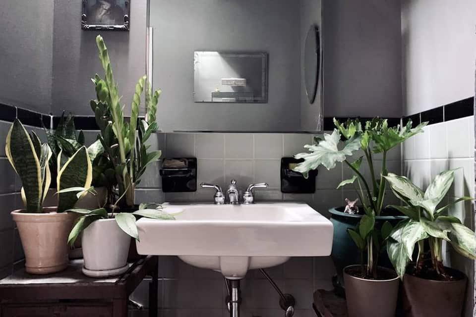 cây trồng trong phòng tắm