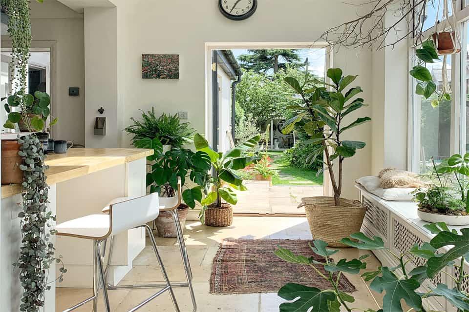 5 cây trồng trong nhà đẹp tạo cảm giác mát mẻ của khu vườn nhiệt đới
