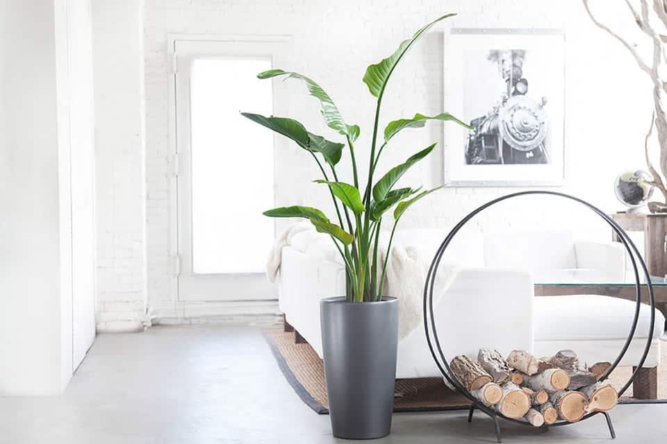 tại sao nên trồng cây trong nhà
