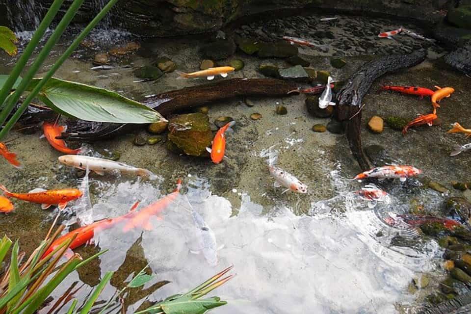 Giảm nồng độ nitrat cao trong hồ cá 1